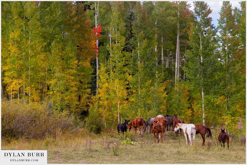 durango wedding photographer changing fall colors horses